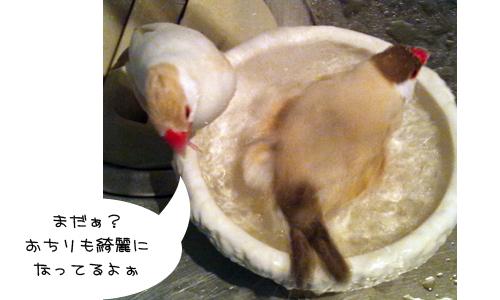 水浴び_2