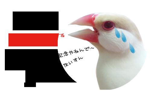 雛換羽完了記念_4.jpg