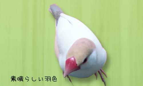 雛換羽完了記念_1.jpg