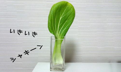 うい らぶ 青梗菜_2.jpg
