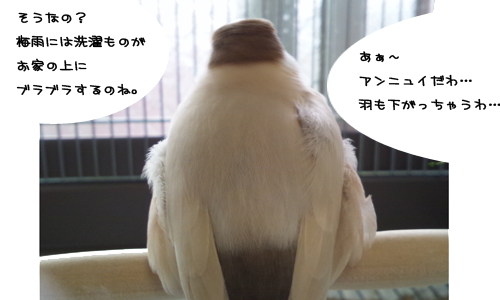 アンニュイな梅雨_4