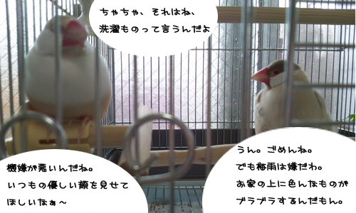 アンニュイな梅雨_3