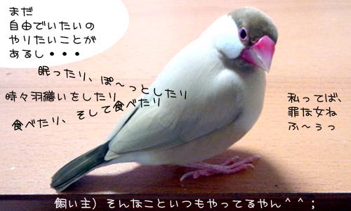 甘え鳴き_3.jpg