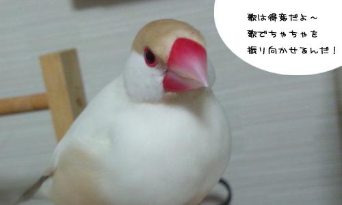 鳥のトリビア的な_2
