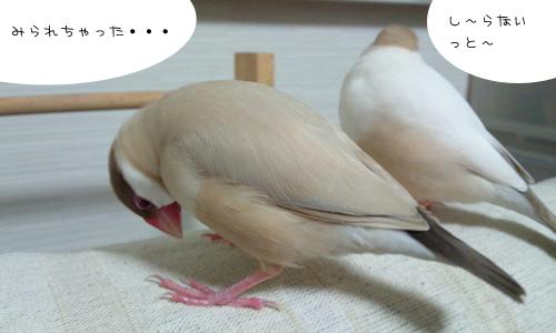 動画でお勉強_6