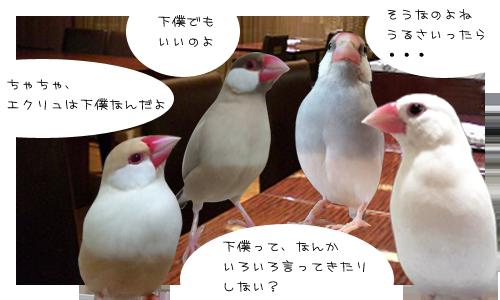 文鳥たちのオフ会_3