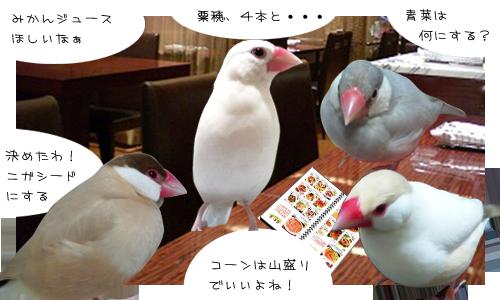 文鳥たちのオフ会_1