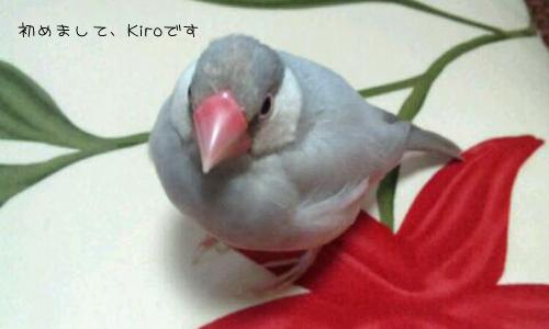 文鳥友達のブログと姫_2
