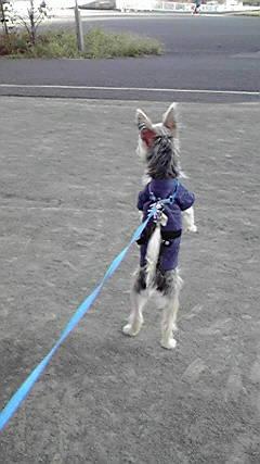 犬道 敵か201211071525