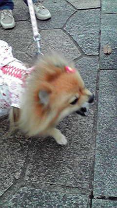 小梅ちゃん怒る 20121130