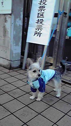 そら 選挙犬 201212160721