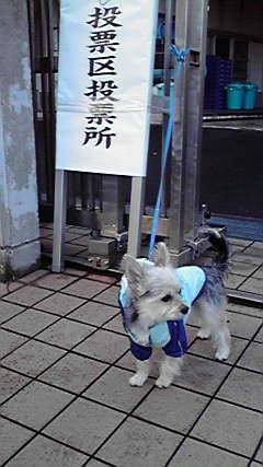 そら 選挙犬② 20121216072