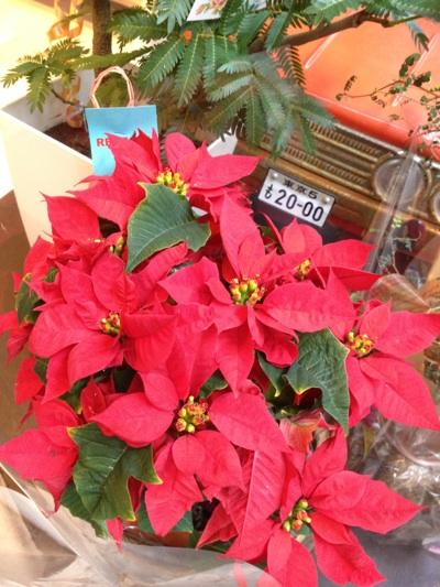 fc2blog_201212041142470d3.jpg