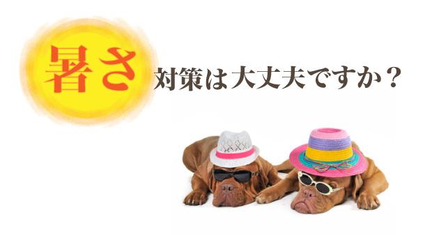 atusa_01.jpg