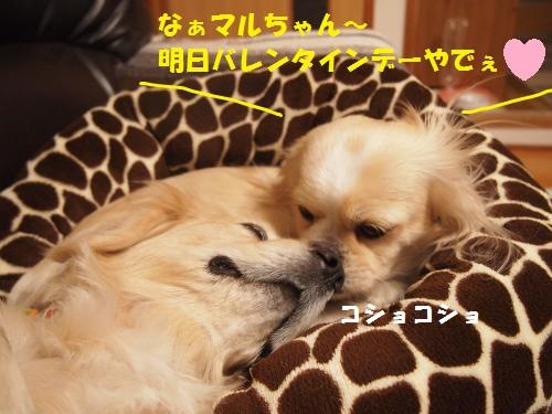 003_convert_20130213225001.jpg