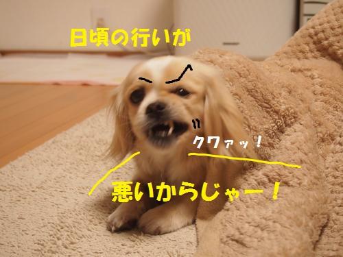 006_convert_20130203221257.jpg