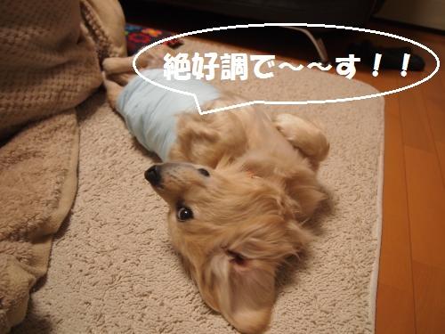 006_convert_20130204225506.jpg