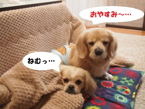 006_convert_20130205225719.jpg