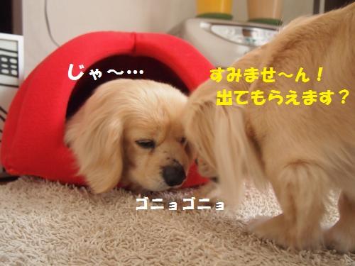 008_convert_20130207221102.jpg