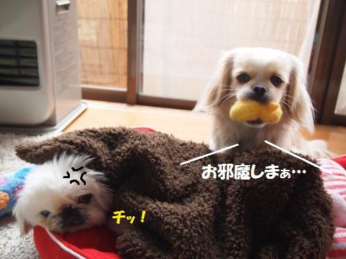 010_convert_20130326223307.jpg