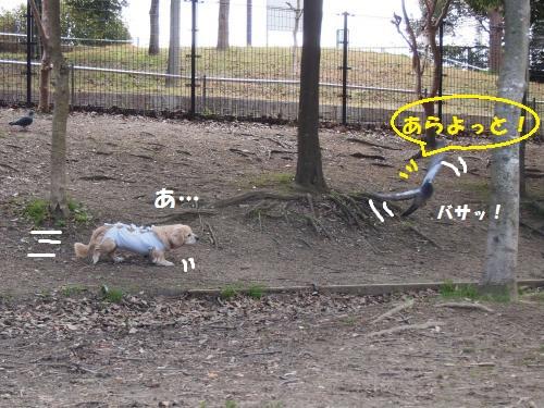 011_convert_20130209215013.jpg