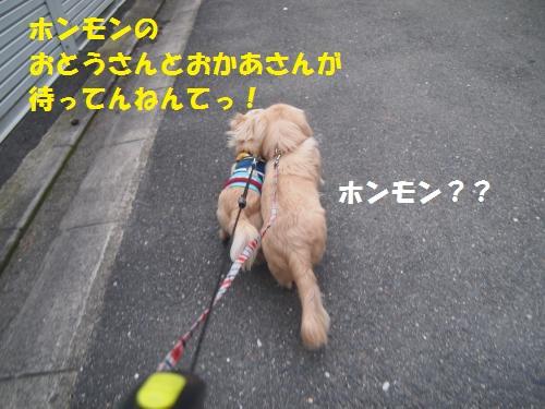 012_convert_20130217231849.jpg