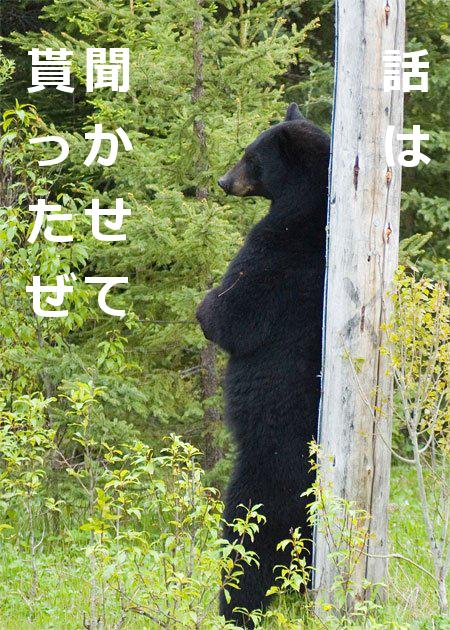 hanashiha_kuma.jpg