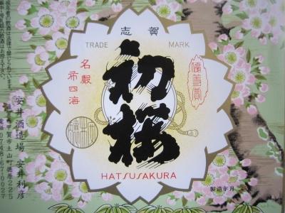 hatusakura.jpg