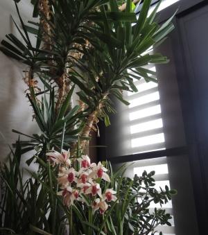 玄関の植物