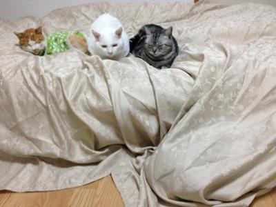 fc2blog_20121019232253dd5.jpg