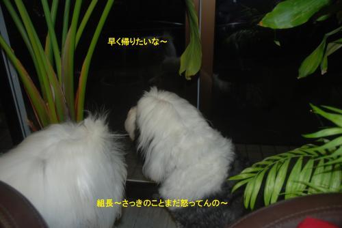 DSC_0104_convert_20121219180946.jpg