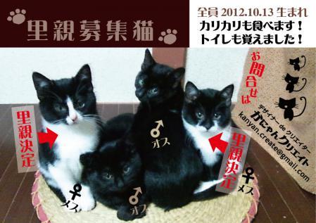 里親募集猫横2