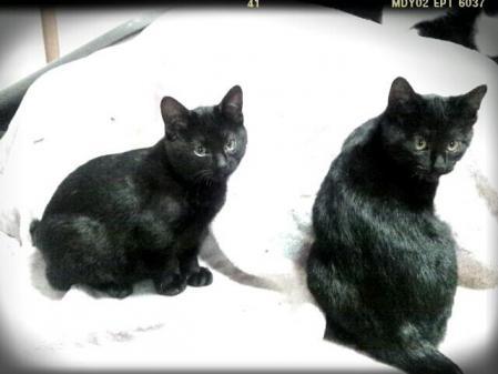 黒猫男子ふたり