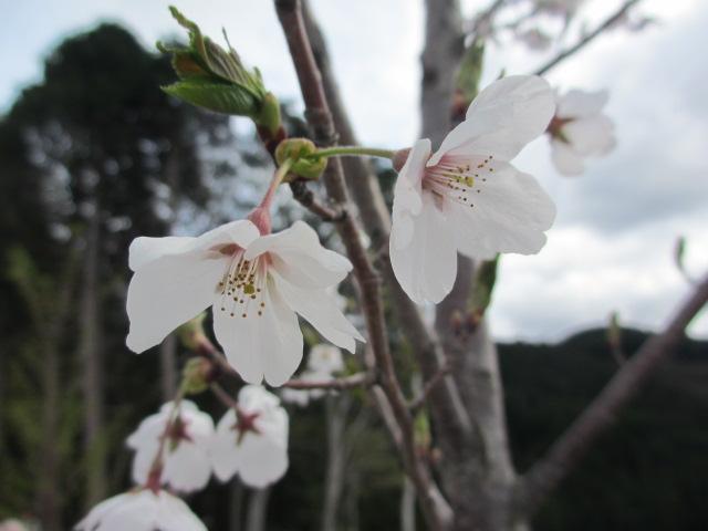 吉野水分神社~義経の隠れ塔16