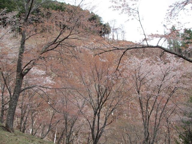 義経の隠れ塔~西行庵(奥千本)5