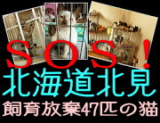 banner_s_kitami47cats.jpg