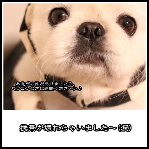 000_20130213160323.jpg