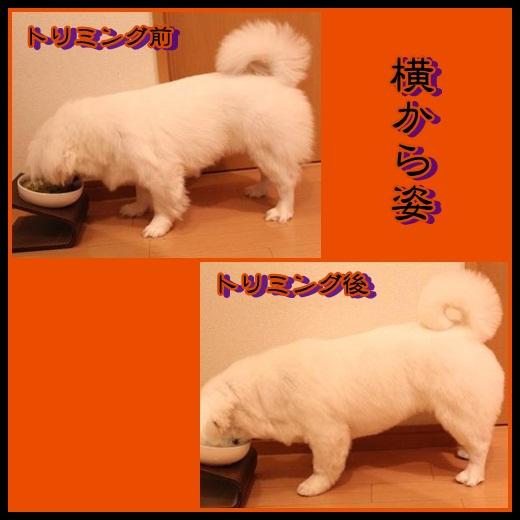 1_20121024134403.jpg