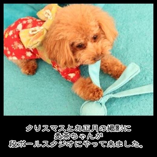 1_20121105164052.jpg