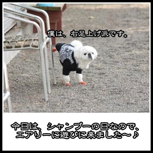 1_20130301145458.jpg
