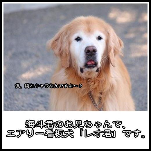 2_20130204115927.jpg