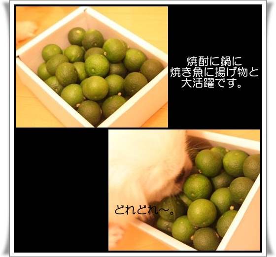 3_20120922145115.jpg