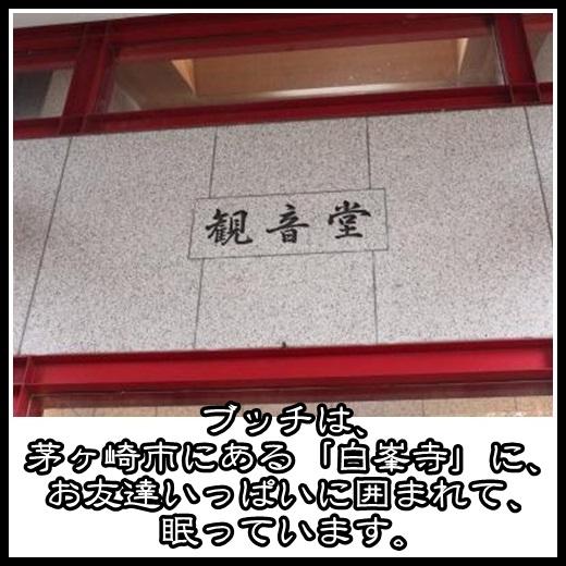 4_20130225143210.jpg