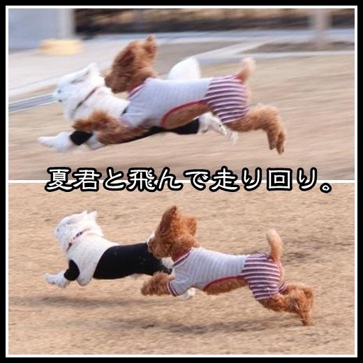 5_20130219095847.jpg