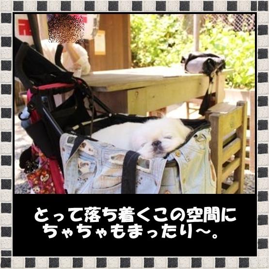 6_20120531083224.jpg