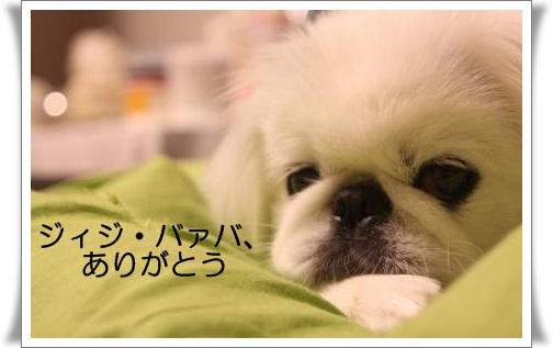 6_20120922145135.jpg