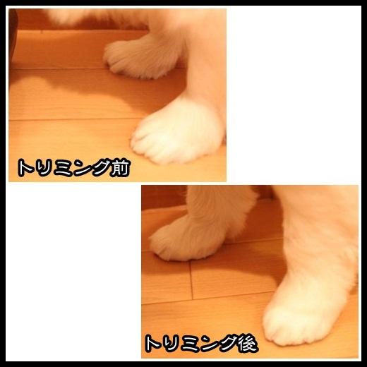 6_20130219115208.jpg