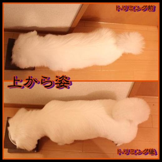7_20121024134437.jpg