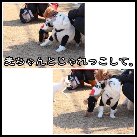 7_20130219095858.jpg