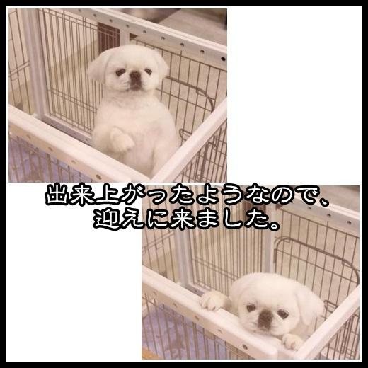 8_20130219105915.jpg